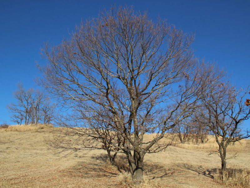 つれづれ404 樹の枝の観察