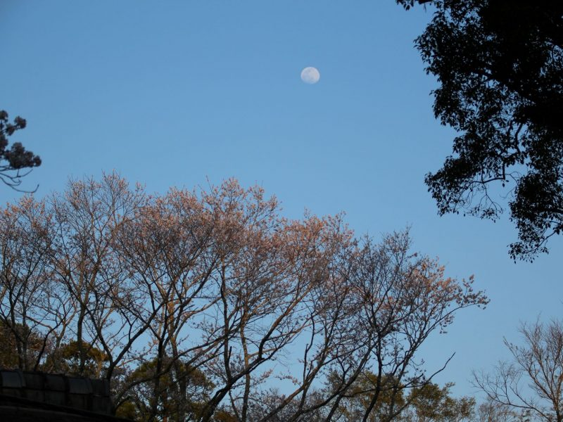 つれづれ408 夜桜